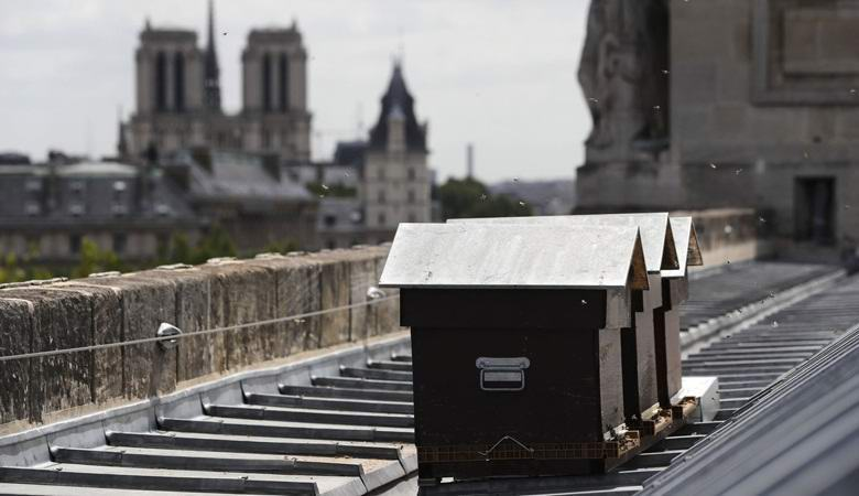 180 thousand bees miraculously survived the fire in Notre-Dame de Paris
